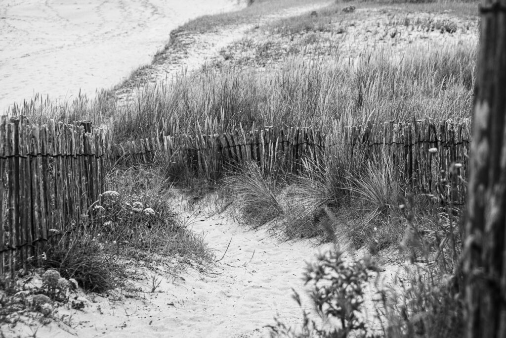 Am Strand, Seegräser und Holzzaun – Île-d'Houat , Bretagne