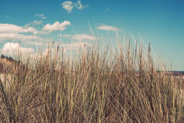 Seegräser mit Ostseestrand Rügen