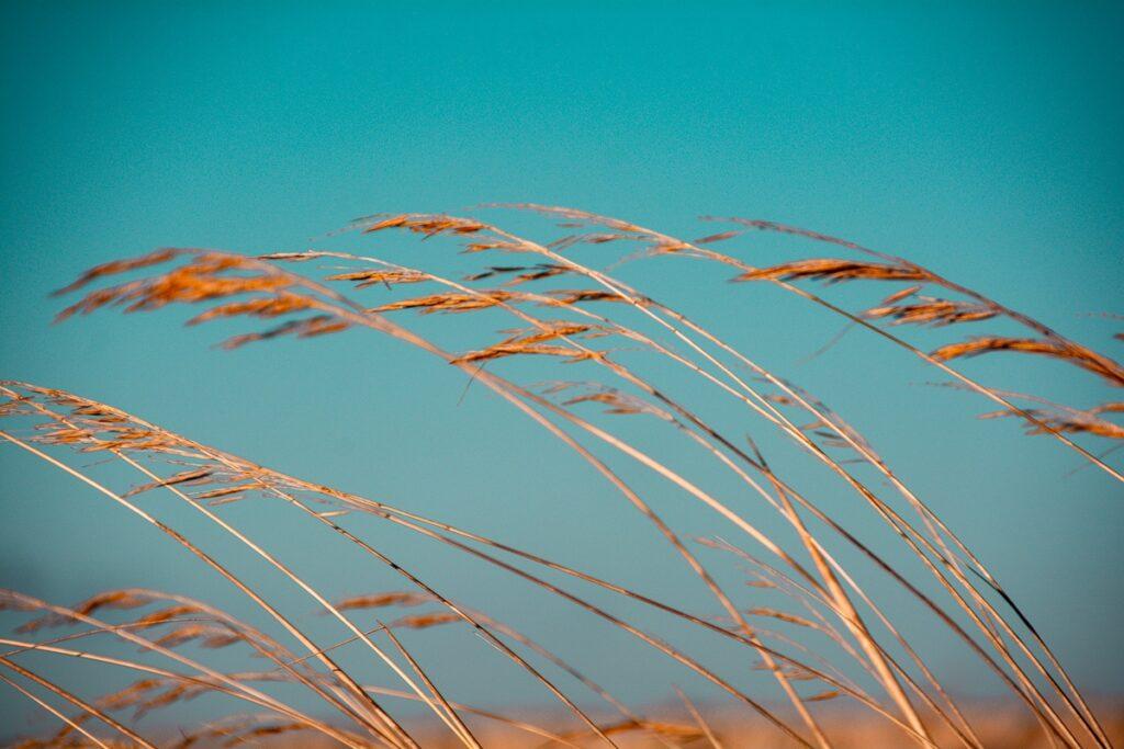 Seegräser im Wind mit türkisfarbenen Himmel – Portugal