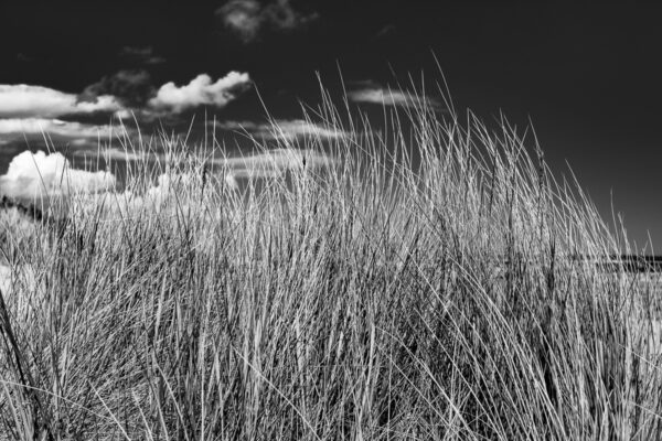 Seegräser Ostseestrand Rügen - Schwarzweißfotografie