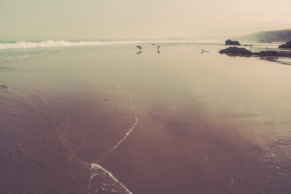 Atlantikküste - Sandstrand - Seevögel - Meeresbrandung - Wandbild Sines Portugal