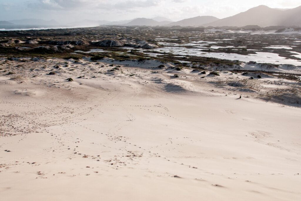 In den Dünen am Joaquina Beach - Praia da Joaquina - Florianópolis, Floripa Brasilien, Brasil, Brazil