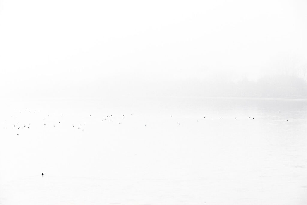 Enten im Nebel - Wandbild Abstrakt
