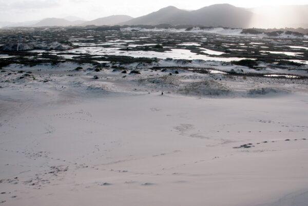 Sanddünen am Joaquina Beach - Praia da Joaquina - Florianópolis, Floripa Brasilien, Brasil, Brazil