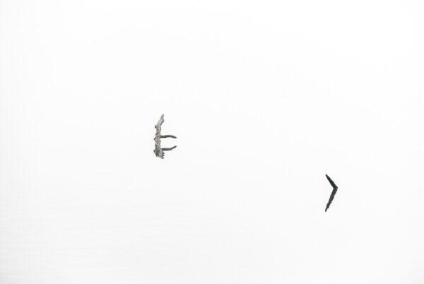 Wurzeln im Nebel, spiegeln sich im Wasser – verträumtes Wandbild